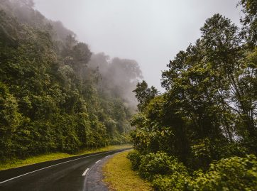 Drive through Nyungwe National Park